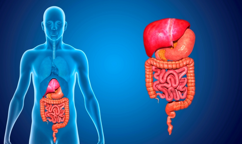endoscopia sangrado digestivo hemorragia digestiva dolor gastrointestinal